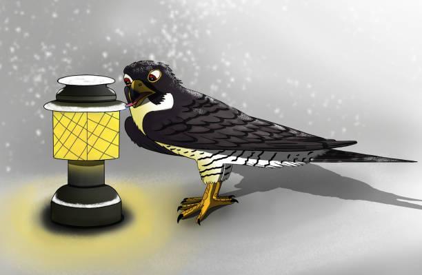 illustrations, cliparts, dessins animés et icônes de oiseau en regard de la lanterne, illustration 2d - cage animal nuit