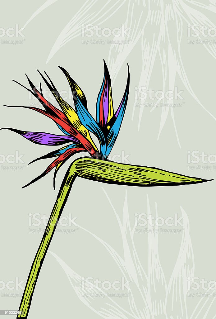 Bird of Paradise royalty-free stock vector art