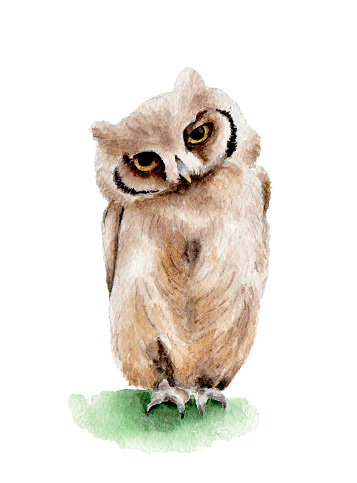 bird owl brown watercolor illustration nature isolated