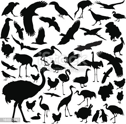 A collection of highly-detailed bird silhouettes.