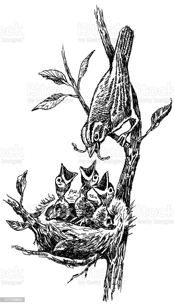 Bird with Worm Feeding Baby Chicks royalty-free stock vector art