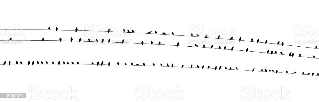 Birds on a wire wide PDK vector art illustration