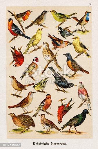istock Birds Ornithology Chromolithography 1899 1317519647