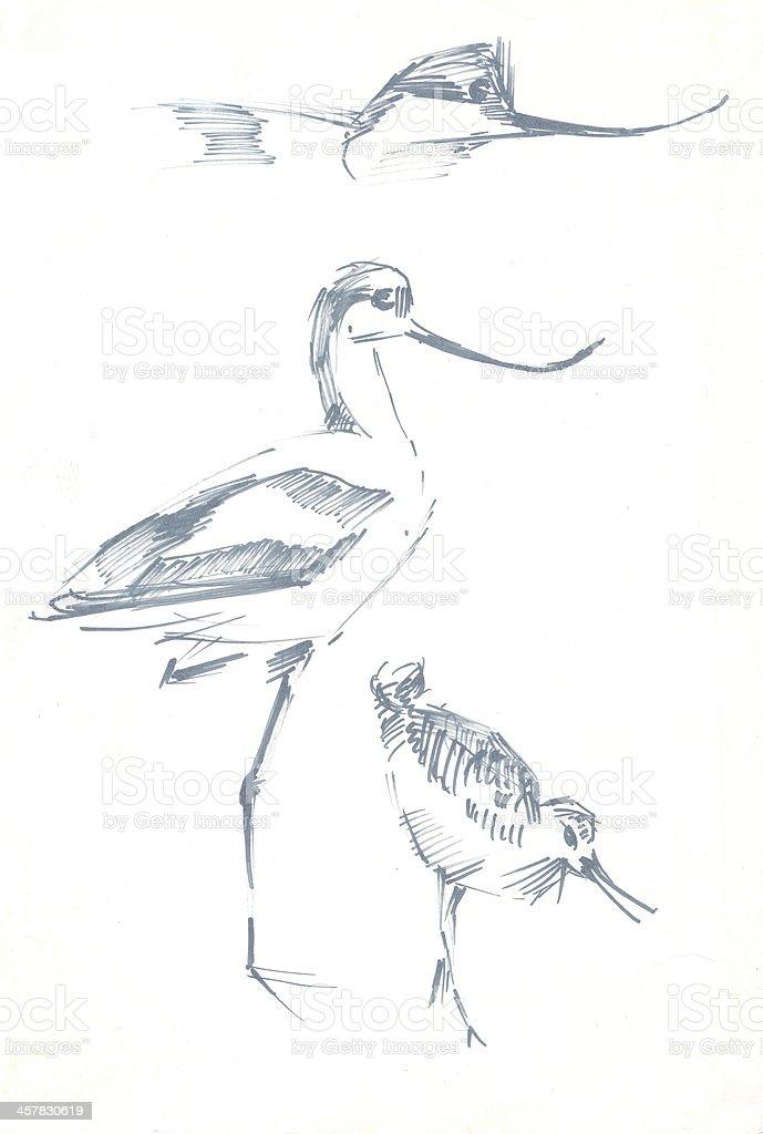 Ptaki Ołówkiem Rysunek Szkic Stockowe Grafiki Wektorowe I Więcej