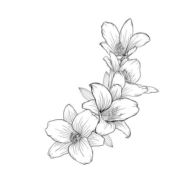 illustrations, cliparts, dessins animés et icônes de lys noir et blanc bouquet isolé sur fond. - tatouages de fleurs