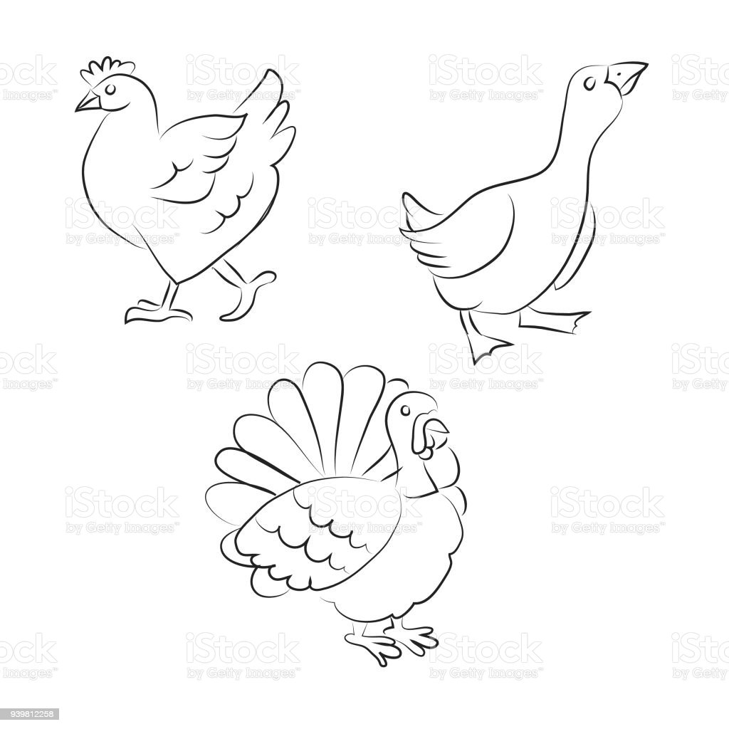 Black And White Cartoon Poultry Goose Chicken Turkey Royalty Free