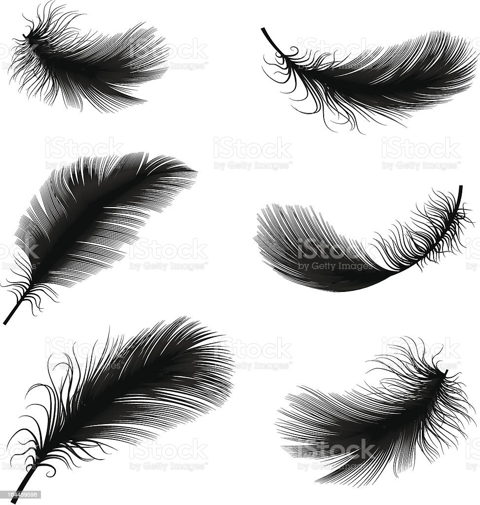 Black and white feather pens vector illustration