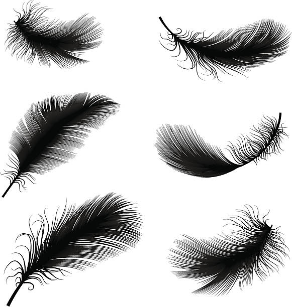 Black and white feather pens vector illustration vector illustration of feather feather stock illustrations
