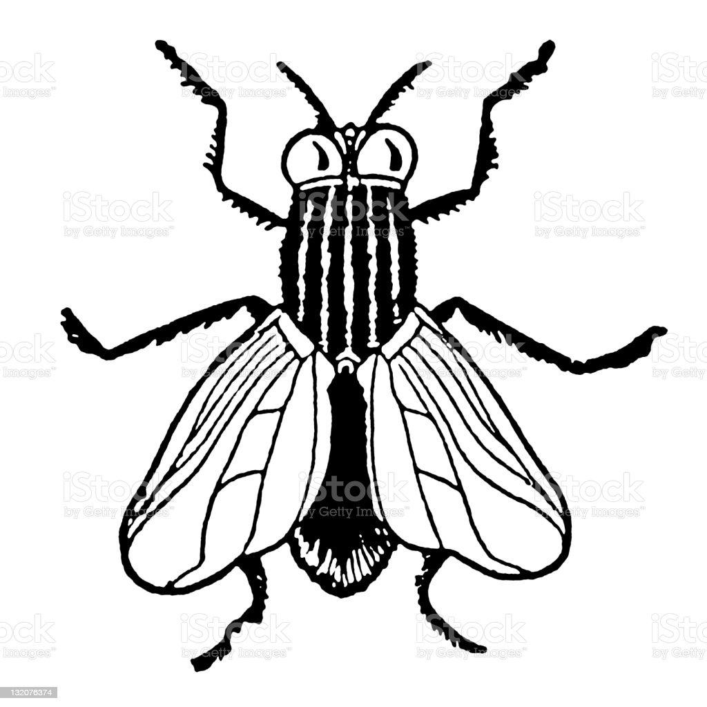 black and white house fly stock vector art more images of animal rh istockphoto com  butterfly clipart black and white