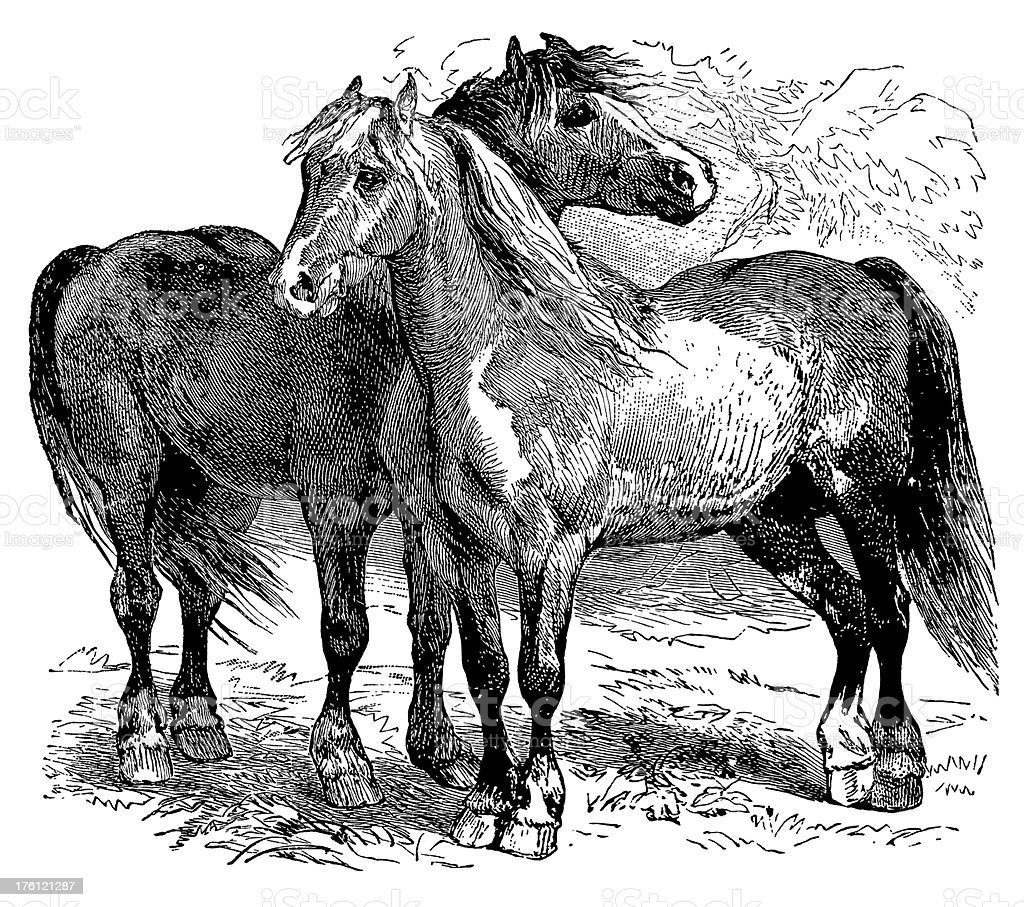Black And White Illustration Of Two Horses Stock Illustration Download Image Now Istock