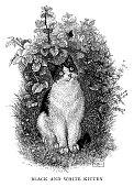 istock Black and white kitten 1268041864