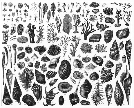 Black and White Sea life engraving