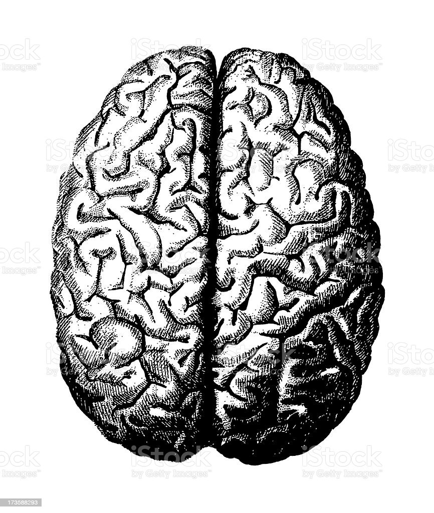 Black and white visual of the brain on a white background vector art illustration