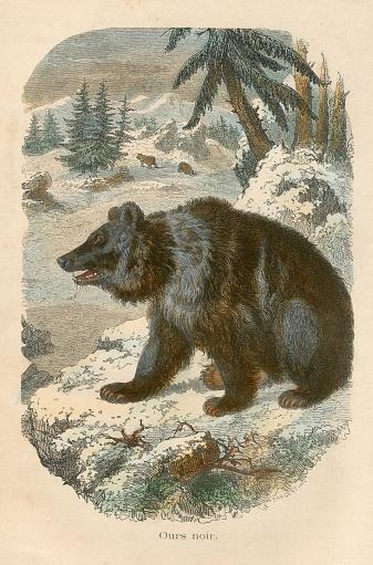 Le Buffon Illustré - 1880