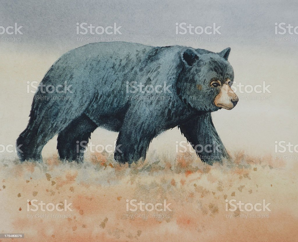 Black Bear Walking vector art illustration