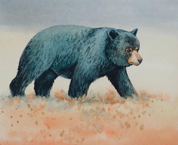 Black Bear Walking vector art illustration
