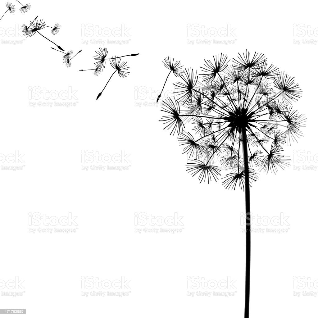 Black drawing of dandelion and seeds in the wind stock - Dessin pissenlit ...