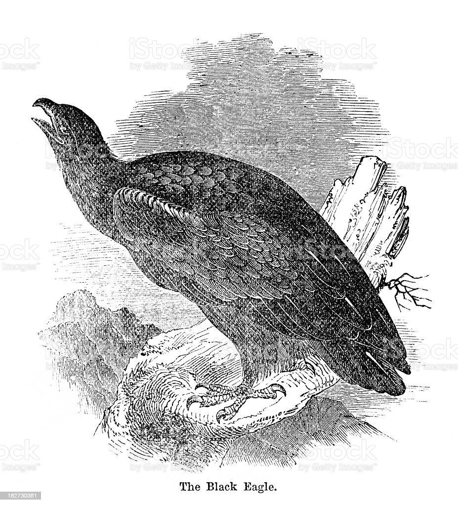 black eagle royalty-free stock vector art