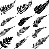 Series of black ferns with different shaped leaves