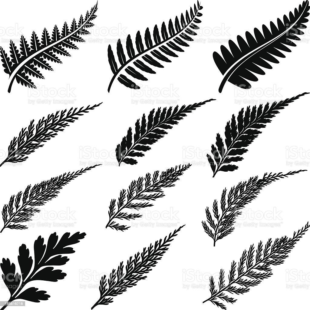 Black ferns vector art illustration