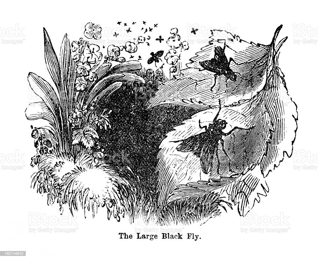 black fly royalty-free black fly stock vector art & more images of 1880-1889