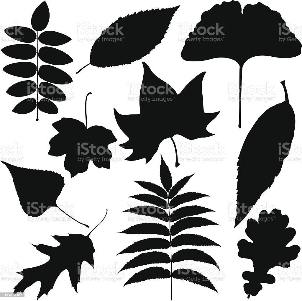 Black Leaves Outline vector art illustration