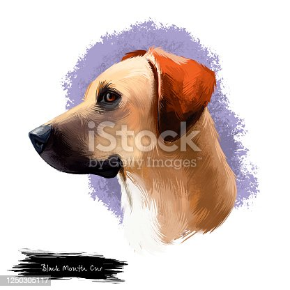 istock Black Mouth Cur, Southern Cur, Yellow Black Mouth dog digital art illustration isolated on white background. American origin scenthound dog. Cute pet hand drawn portrait. Graphic clip art design 1250305117