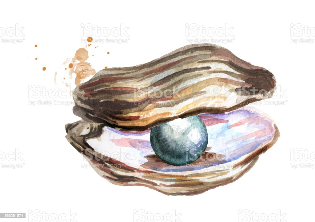 Black Pearl In The Shell Hand Drawn Watercolor ...