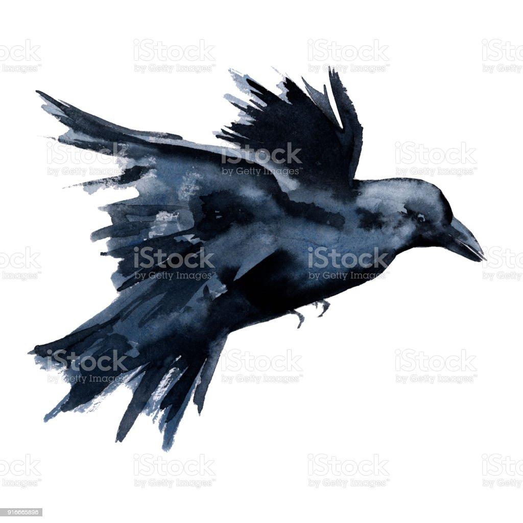 Ilustración de Cuervo Negro Aislado Sobre Fondo Blanco y más banco ...