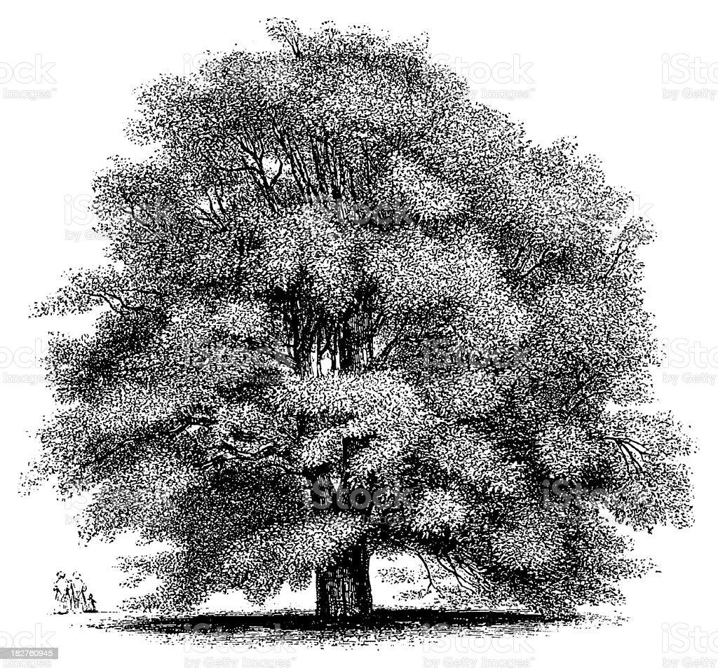 Black white vintage clip art illustration of a tree stock vector art black white vintage clip art illustration of a tree royalty free black white vintage altavistaventures Gallery