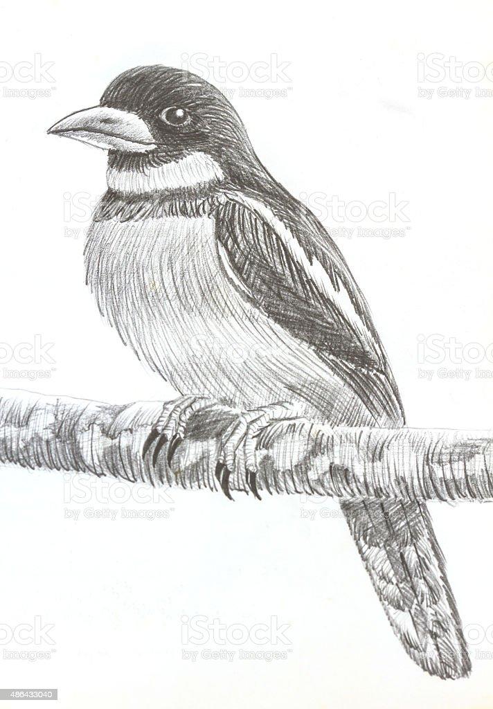 Czarnored Broadbill Ptak Rysunek Stockowe Grafiki Wektorowe I