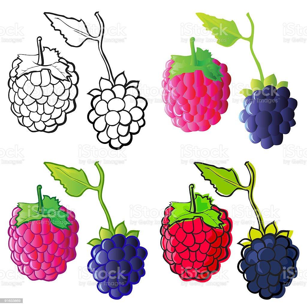 Blackberry & Raspberry royalty-free stock vector art