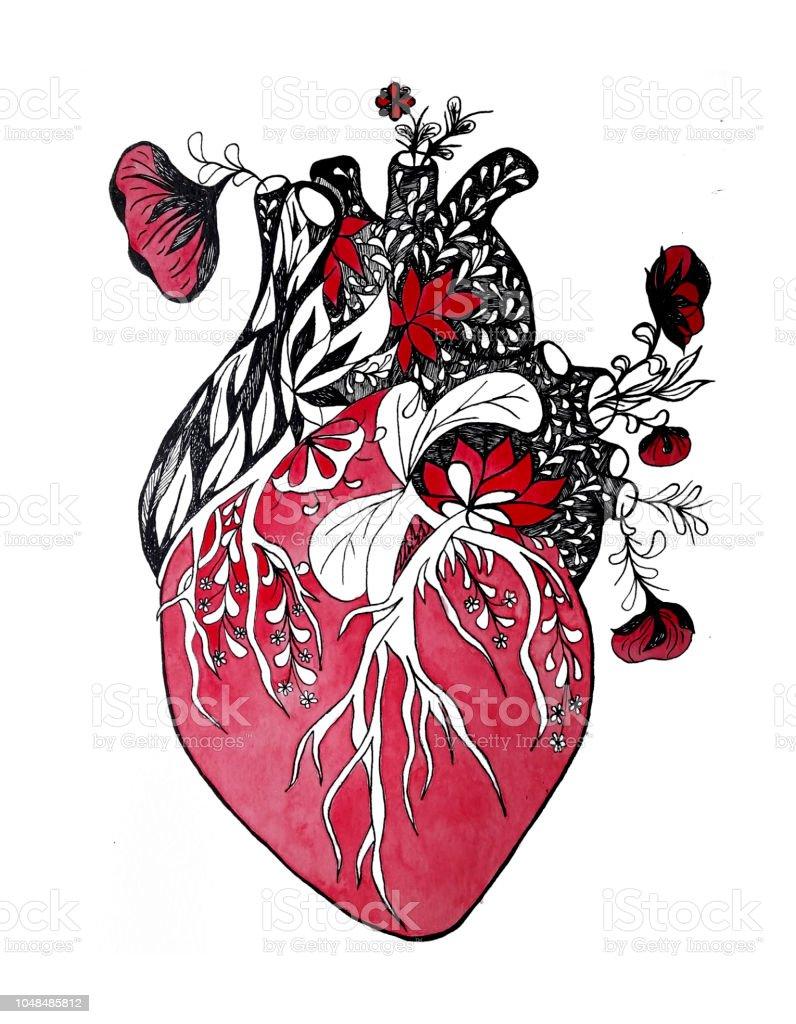 Blooming Anatomical Human Heart Ink Illustration Stock