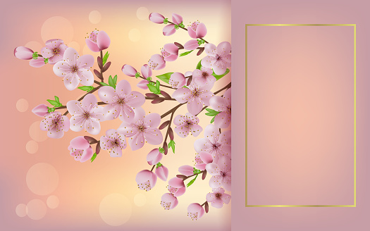 blooming cherry branch. japan sakura cherry branch with blooming flowers. Cherry blossoms floral background.