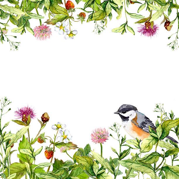 ilustrações, clipart, desenhos animados e ícones de blossom flowers, wild grass, spring herbs, bird. floral card. watercolor - bordas florais