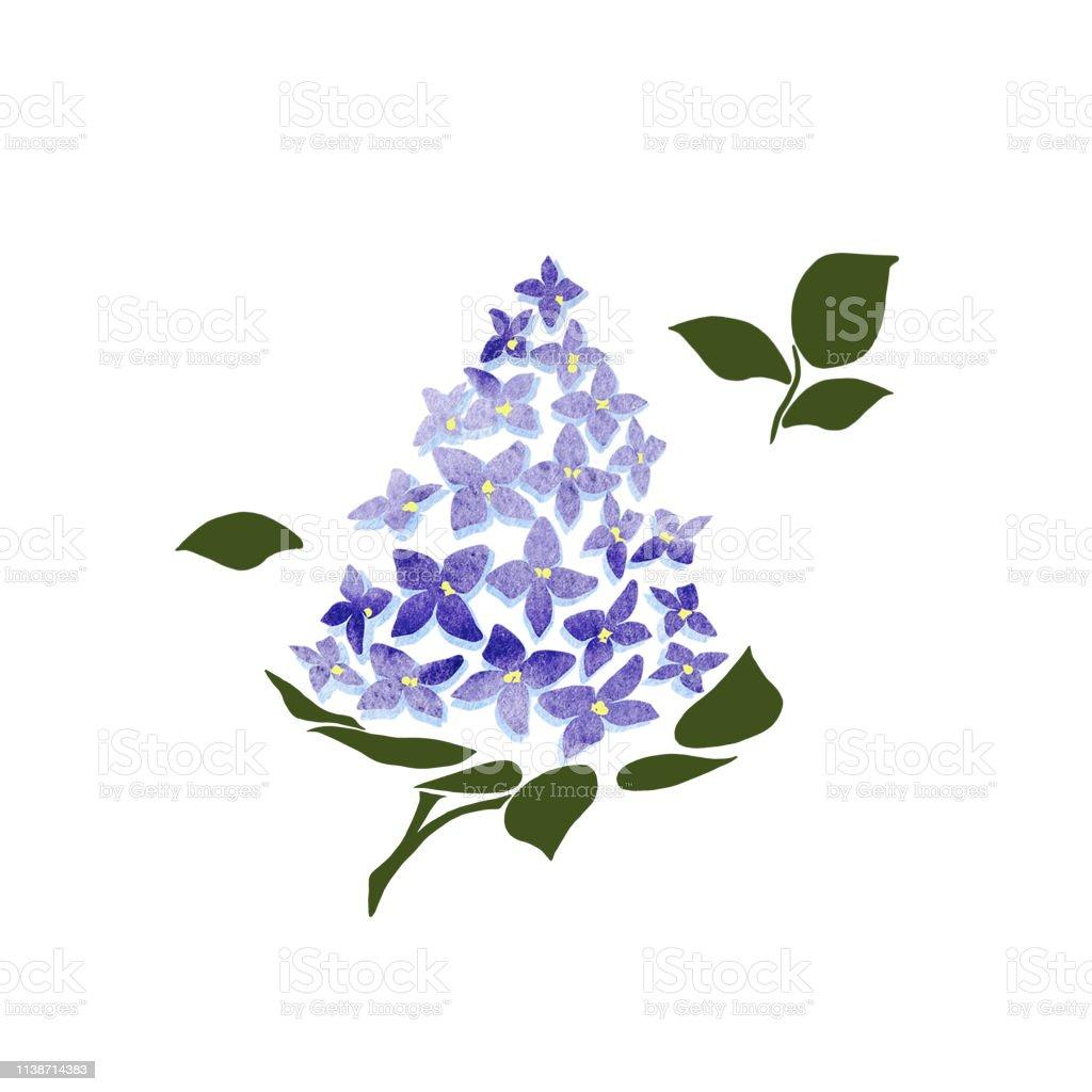 Lilas Fleurissant Sur Le Fond Blanc Dessin De Fleur De Branche