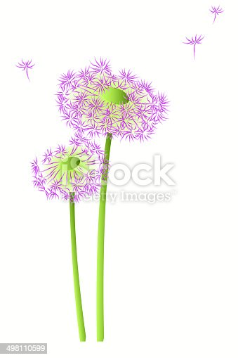 Illustration of two violet blowballs with flying seeds isolated on the light background