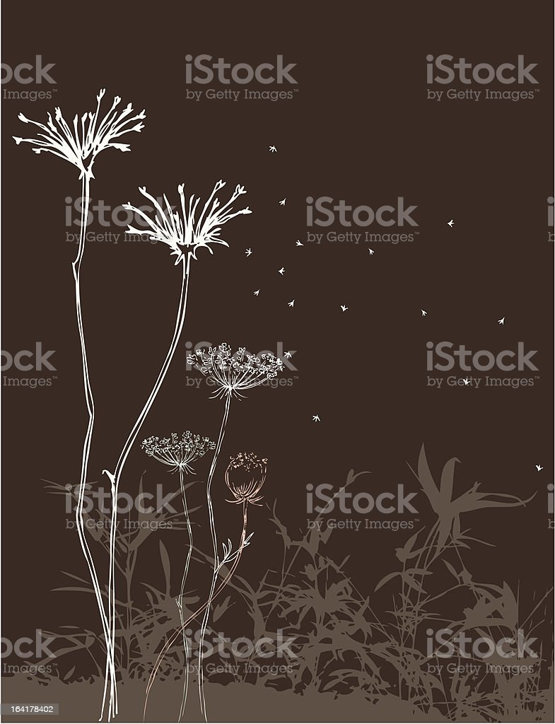 Blowing Annes Lace royalty-free stock vector art