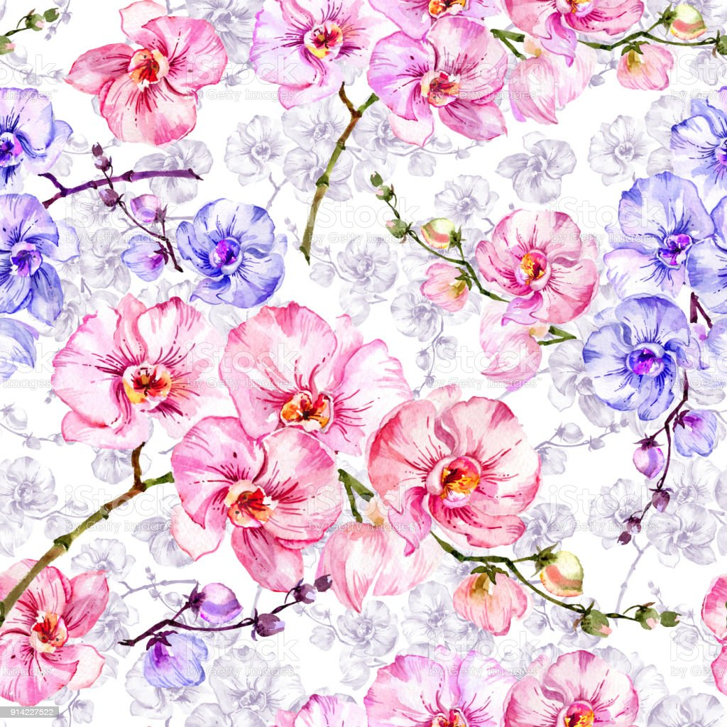 Blue And Pink Orchid Flowers With Outlines On White Background