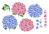 青色とピンク色の水彩画あじさいの花のデザイン。