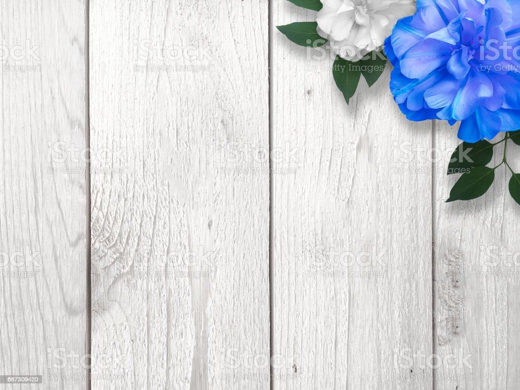 blue and white flowers over wood background stock vector