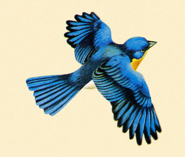 Royalty Free Bluebird Clip Art, Vector Images ...