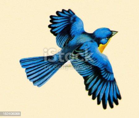 484 Bluebird Flying Illustrations Royalty Free Vector Graphics Clip Art Istock