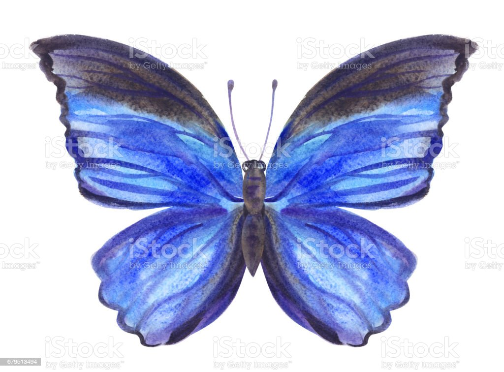 Blue butterfly royalty-free blue butterfly stock vector art & more images of blue