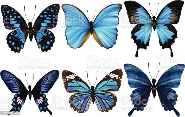 Blue butterflysvector illustration illustration id167591068?b=1&k=6&m=167591068&s=612x612&h=ztpc sczf9shdauem2szsig0u ysh1yignoateons4q=