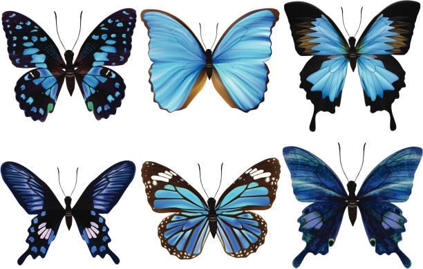 Azul-ilustración vectorial de mariposa - ilustración de arte vectorial