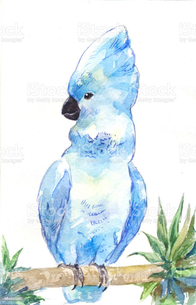 Blue cockatoo. Watercolor parrot, outline by hand. royalty-free blue cockatoo watercolor parrot outline by hand stock vector art & more images of bird