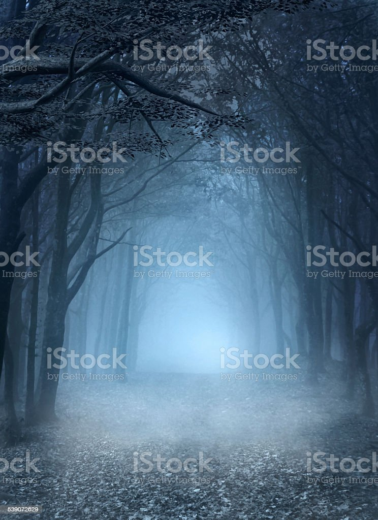 Blue foggy forest vector art illustration
