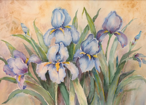 Beautiful blue irises done with watercolors. Painted by my mother.