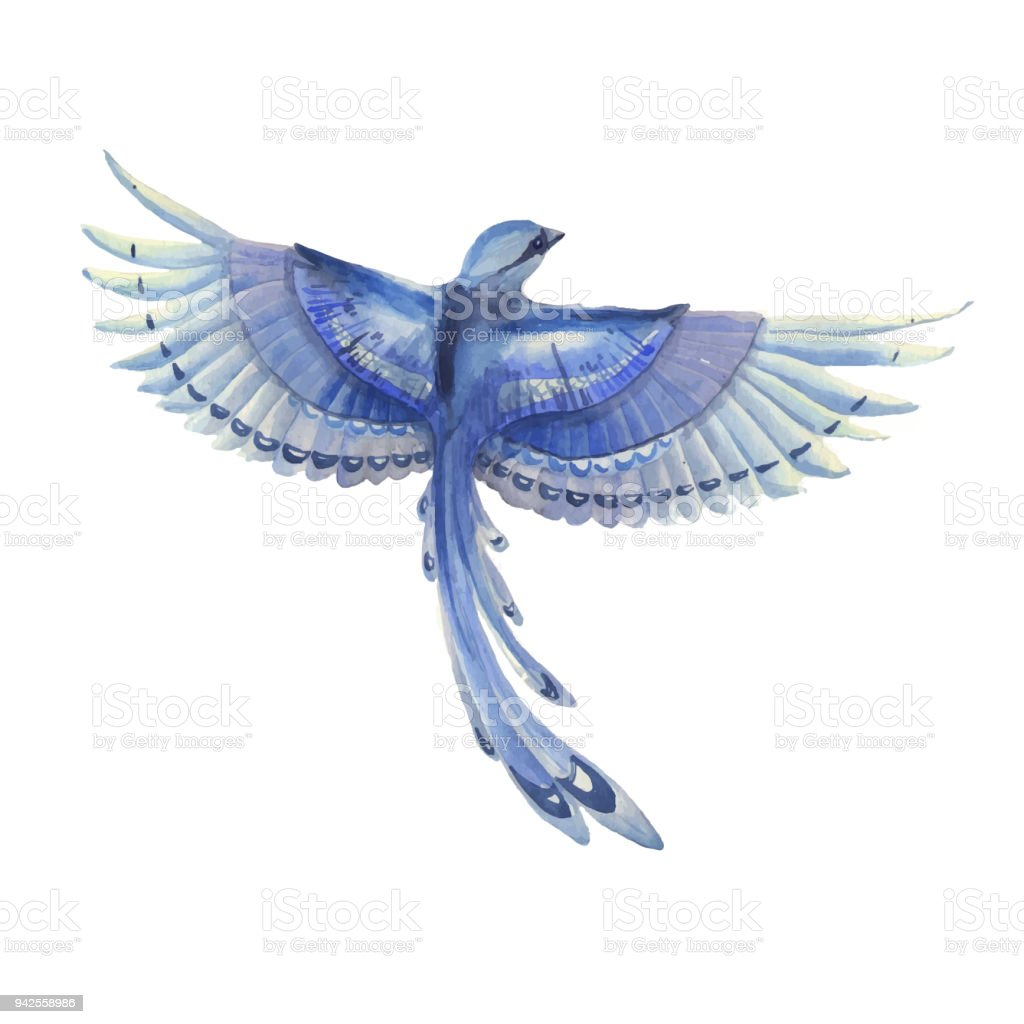 Blue Jay Bird Flying Watercolor Hand Drawn Illustration Blue ...
